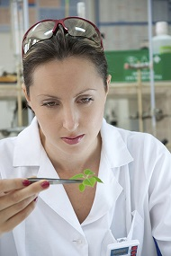 scientist examining herb leaves