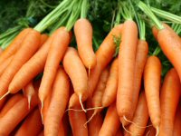 Bunches of raw carrots